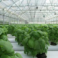 mallas de sombreo para cultivos